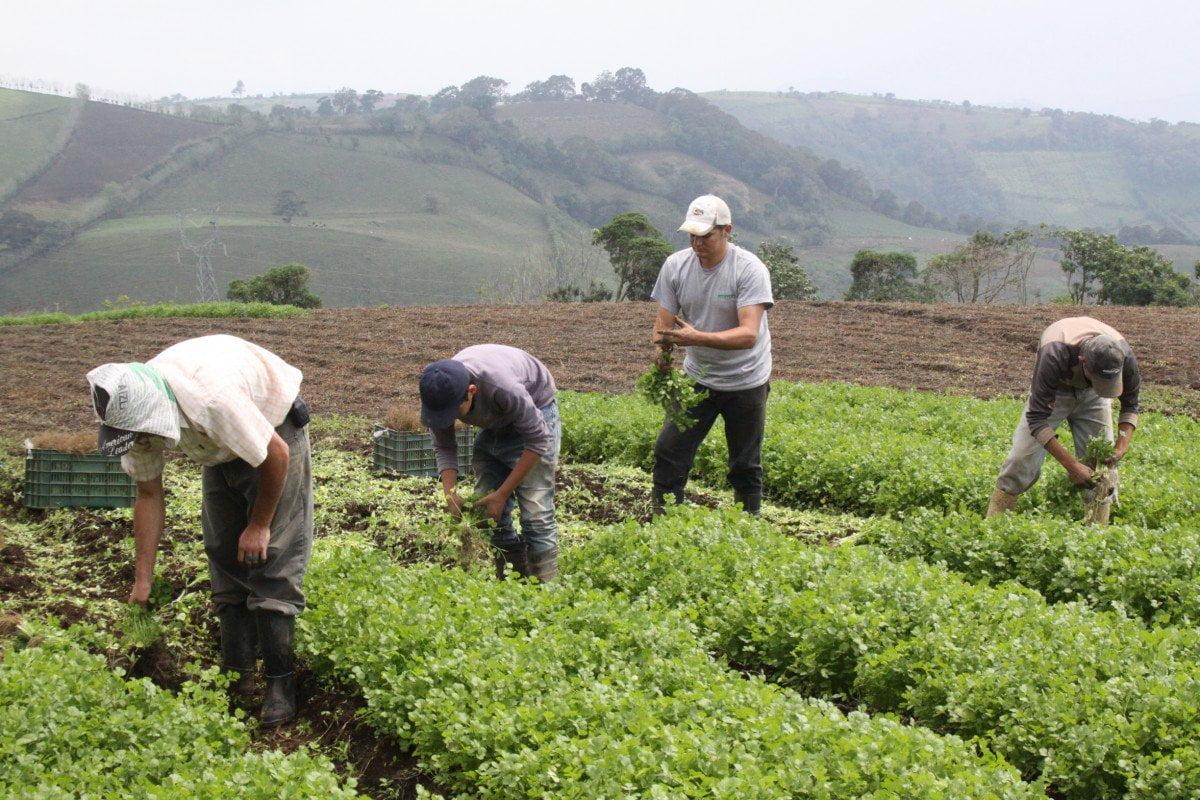 https://www.tatuytv.org/wp-content/uploads/2019/05/agricultura_campesina_miguel_nu%C3%B1ez.jpg